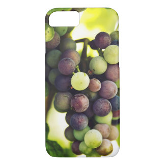 Wonderful Vine Grapes,  Autumn Fall Sun iPhone 8/7 Case