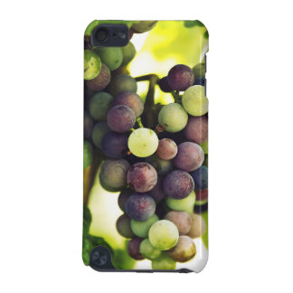 Wonderful Vine Grapes,  Autumn Fall Sun iPod Touch 5G Cases