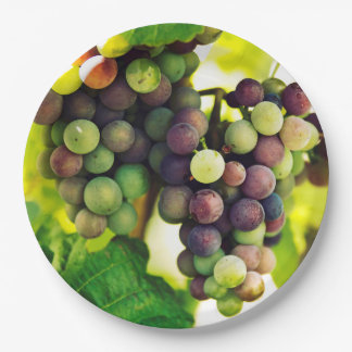 Wonderful Vine Grapes, Nature, Autumn Fall Sun 9 Inch Paper Plate