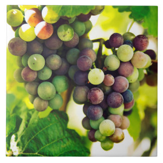 Wonderful Vine Grapes, Nature, Autumn Fall Sun Ceramic Tile