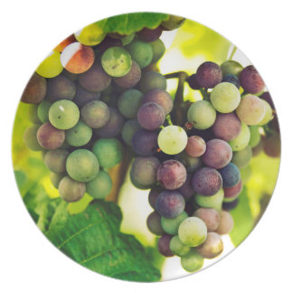 Wonderful Vine Grapes, Nature, Autumn Fall Sun Party Plate