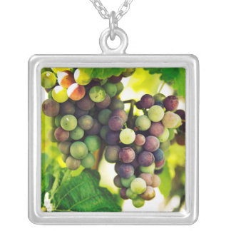 Wonderful Vine Grapes, Nature, Autumn Fall Sun Silver Plated Necklace