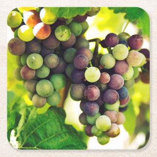 Wonderful Vine Grapes, Nature, Autumn Fall Sun Square Paper Coaster
