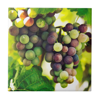 Wonderful Vine Grapes, Nature, Autumn Fall Sun Tile