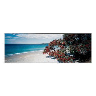 """Wonderful Waiheke"" - Onetangi Beach Poster"