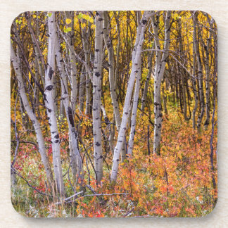 Wonderful Woods Wonderland Drink Coasters