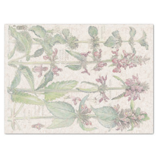 Wood Betony Wildflower Flowers Tissue Paper