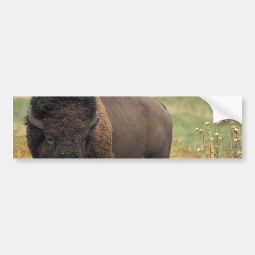 Wood Bison Bumper Stickers