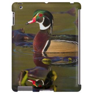 Wood Duck Drake 1