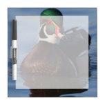 Wood Duck Drake 2 Dry Erase Board