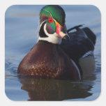 Wood Duck Drake 2 Square Sticker