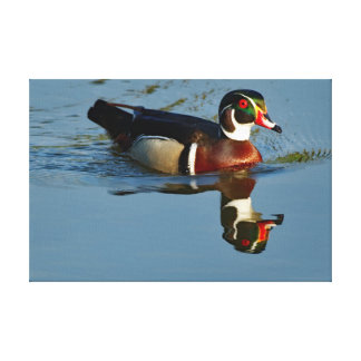 Wood Duck Drake Reflecting Canvas Print