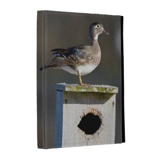 Wood Duck female on nest box in wetland iPad Folio Case