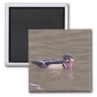 Wood Duck Magnet