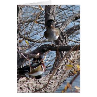 Wood Ducks in a Tree Card