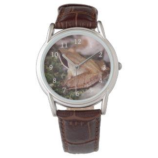 Wood Frog Watch