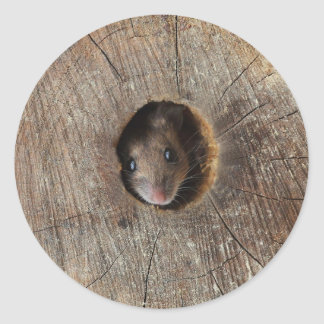Wood Mouse Classic Round Sticker