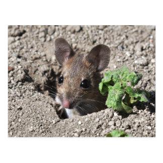 Wood mouse postcard