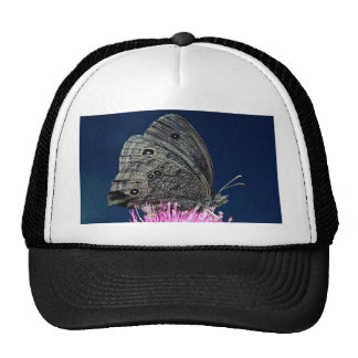 Wood nymph on pink thistle against blue sky mesh hat