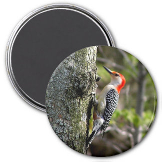 wood pecker - red bellied 3 inch round magnet