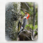Wood Pecker - Red Bellied Mouse Pad