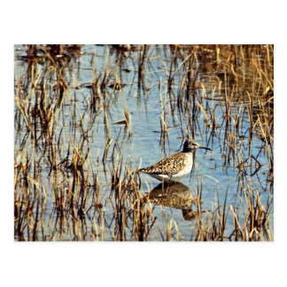 Wood Sandpiper, Amchitka Is, 1973 Postcard