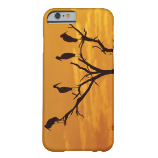 Wood Stork Mycteria americana adults at iPhone 6 Case