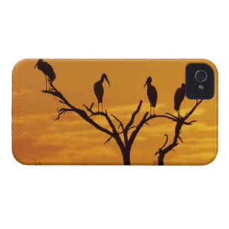 Wood Stork, Mycteria americana,adults at Case-Mate iPhone 4 Case