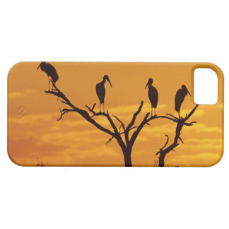 Wood Stork, Mycteria americana,adults at iPhone 5 Case