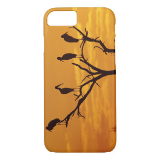 Wood Stork, Mycteria americana,adults at iPhone 7 Case