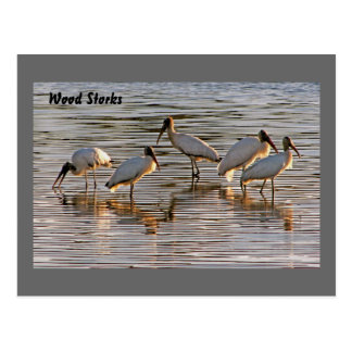 Wood Storks at Dusk Postcard