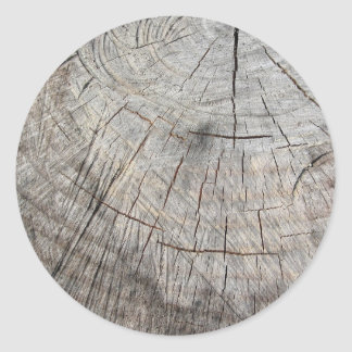 Wood texture of cut pine tree trunk round sticker