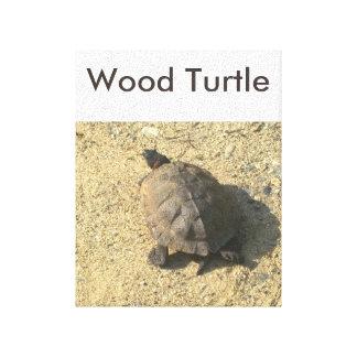 Wood Turtle Canvas Print