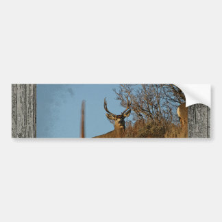 Wood wall window mule deer 3 bumper sticker