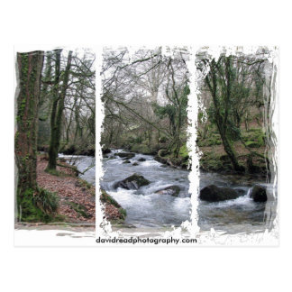 Wooded stream postcard