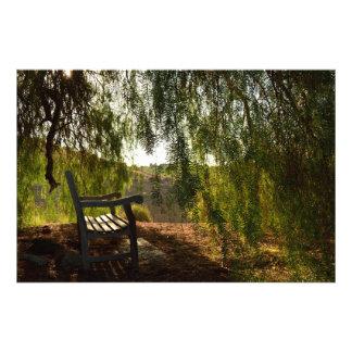 Wooden Bench [24x20] Photo Print