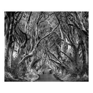 Woodland Avenue Photo Print