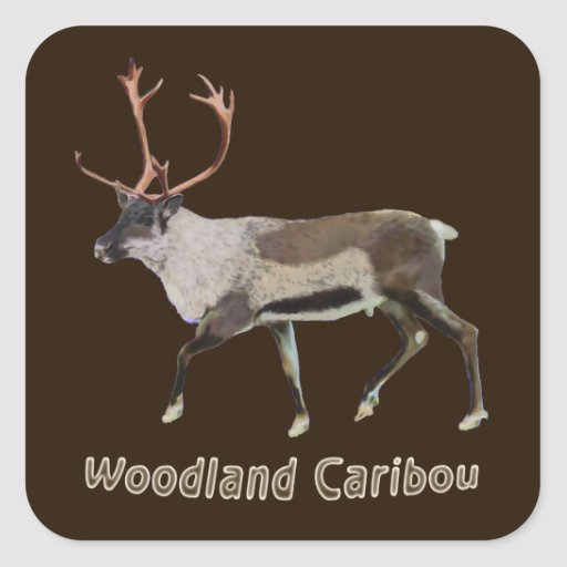 Woodland Caribou Square Stickers