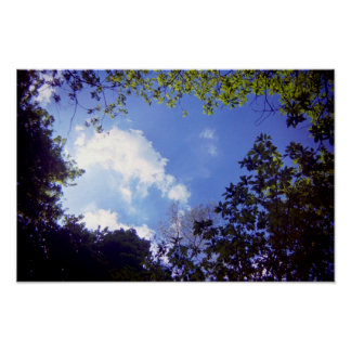 Woodland Clouds Poster