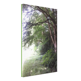 Woodland Edge Trees Wrapped Canvas