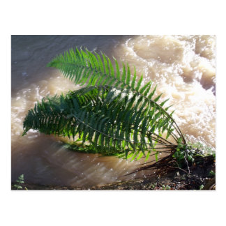 Woodland Fern And Flood Postcard