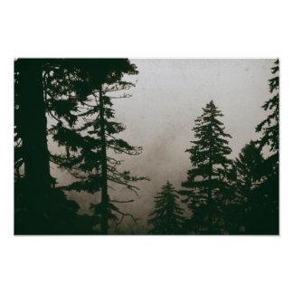Woodland Forest Pine Tree Vintage Nature Pines Poster