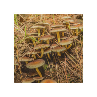 """Woodland fungus"" design wall art"