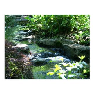 Woodland Garden Stream Postcard