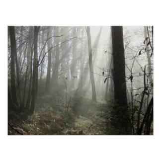 Woodland Morning Mist Poster