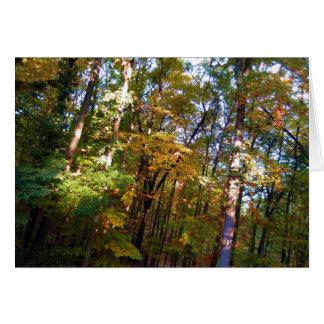 Woodland Note Card Autumn Sunshine