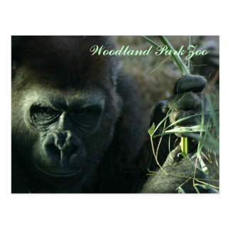 Woodland Park Zoo Gorilla Postcard