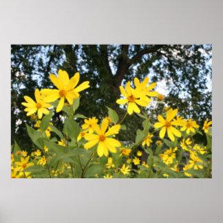 Woodland Sunflowers Poster
