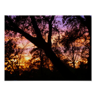 Woodland Sunset Poster