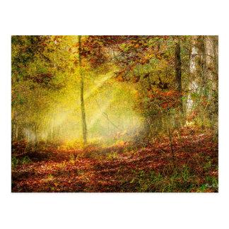 Woodland Trail Postcard